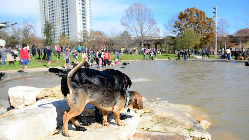 Johnny Steele Dog Park Reopens for First Time After Hurricane Harvey