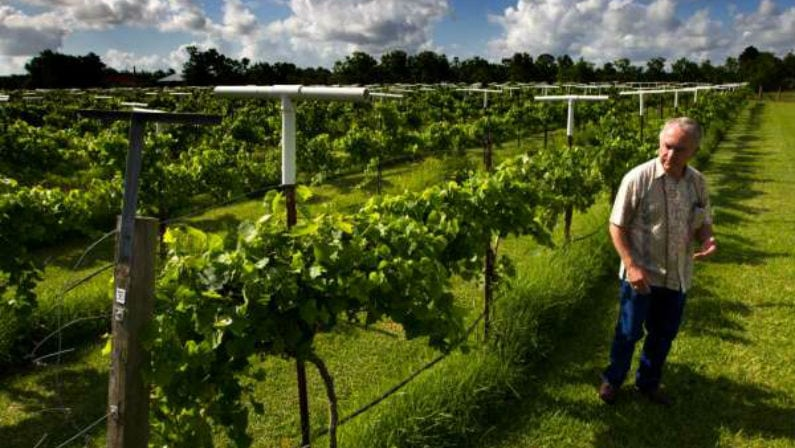 Visit Haak Vineyards & Winery for Half-Off Through Groupon