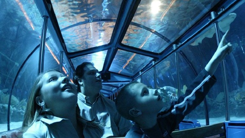Houston Aquarium Super Saturdays 2 For 1 Deals In 2020