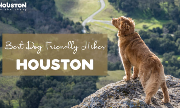 10 Dog Friendly Hiking Trails In Houston – Best Places To Hike With Pets