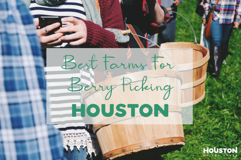 15 Strawberry Picking Farms In Houston – Best Fruit Picking Near You